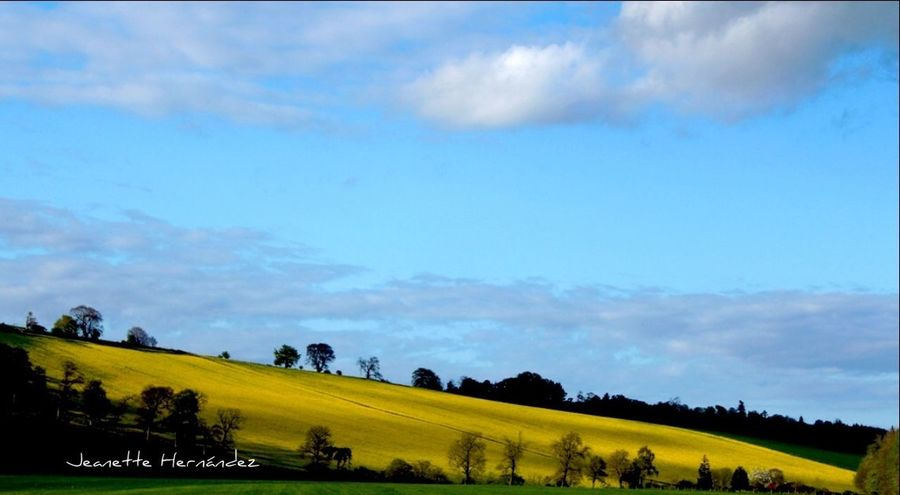 Yellow field in the morning Streamzoofamily Streamzooers Streamzoo StreamzooPics