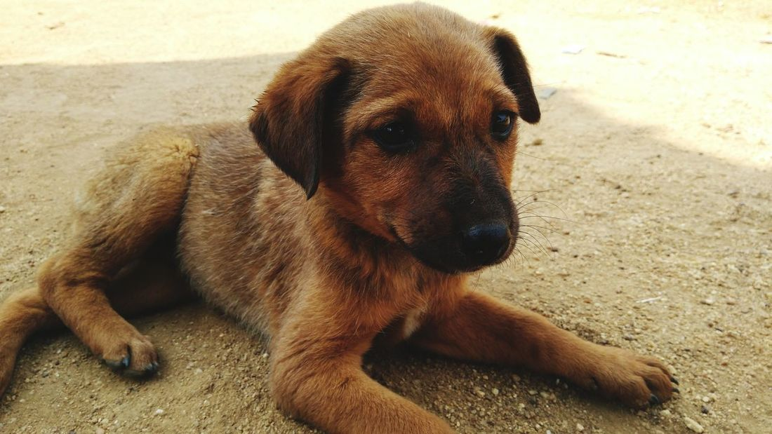 Puppy Indian Street Dog Street Dog Dog Pets Domestic Animals One Animal Outdoors Mammal Sitting Animal Themes Nature Close-up Day A New Beginning