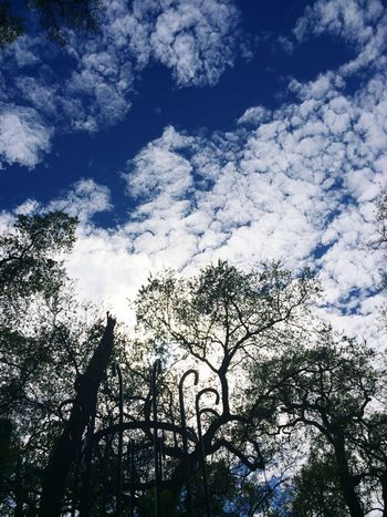 Clouds Trees Sky Branches