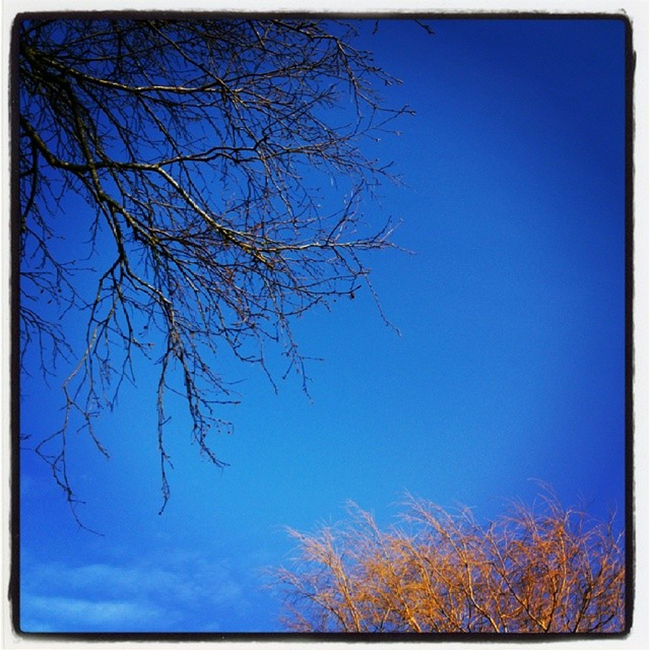 transfer print, blue, bare tree, branch, low angle view, tree, auto post production filter, clear sky, nature, tranquility, beauty in nature, sky, scenics, growth, tranquil scene, outdoors, day, no people, copy space, sunlight
