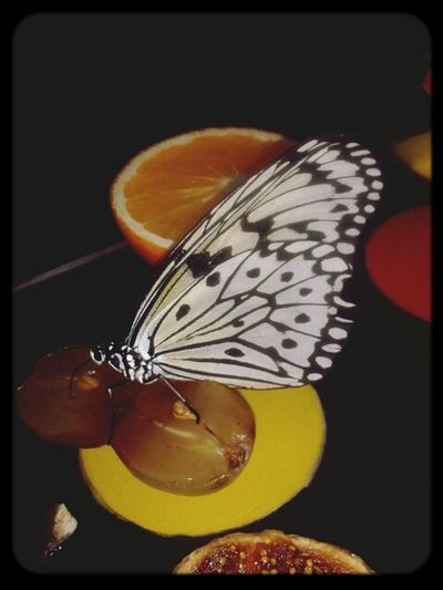 Taking Photos Artis  Animal_collection Butterfly
