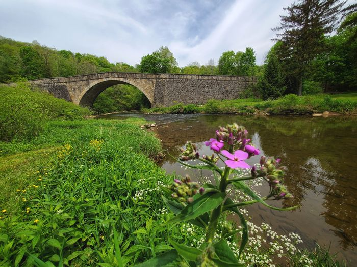 View of flowering plants by river against cloudy sky