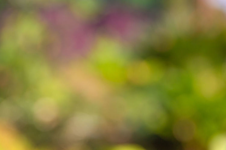 Defocused Abstract light bokeh of light on tree , Abstract background Backgrounds Beauty In Nature Plant Defocused No People Full Frame Nature Green Color Flower Growth Abstract Outdoors Flowering Plant Day Freshness Tranquility Abstract Backgrounds Springtime Selective Focus Yellow