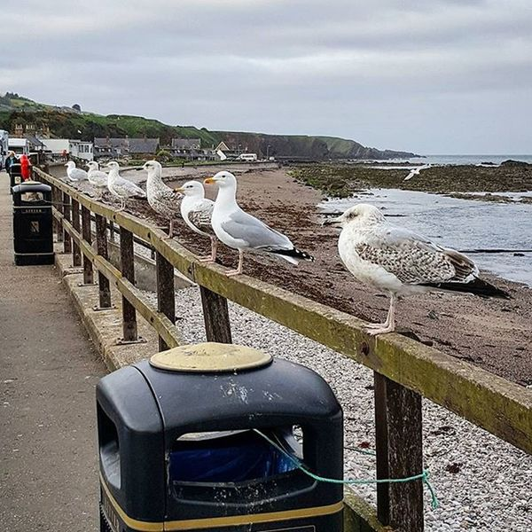 Dinner Queue - Do you ever get the feeling you're being watched?! 😅 Haha. 'Miiinne!' Dinnerqueue Seagulls Queue Verybritish Waiting Fishandchips LOL Takeaway Favplace Mine Findingnemo Pest Streetphotography Beach Stonehaven Perspective Sea Aberdeenshire Scotspirit Seaside POTD Photooftheday Visitaberdeenshire EyeEm Best Shots My Commute