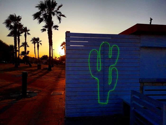 This is not Colorado. Cactus Tree Treepalm Palm Palm Tree Sunset Sunset #sun #clouds #skylovers #sky #nature #beautifulinnature #naturalbeauty #photography #landscape Sunlight Paradise Summer Sunset And Clouds  Colors colour of life Nature Nature Photography Naturelovers Sky First Eyeem Photo
