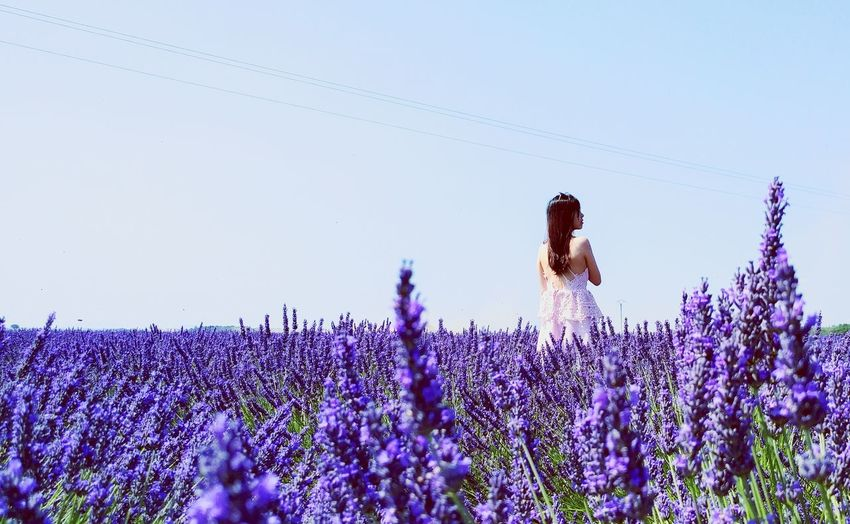 View Of Woman Standing In Lavender Field