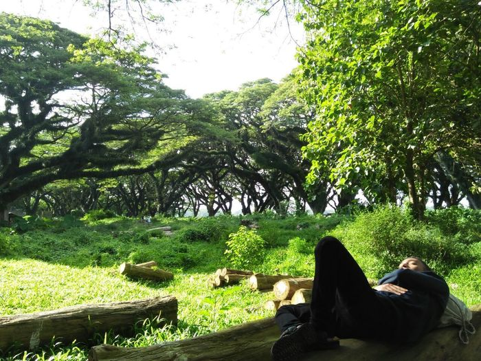 Live For The Story Tree Sleep Time Enjoying The Moment Day Outdoors at East Java, Indonesia