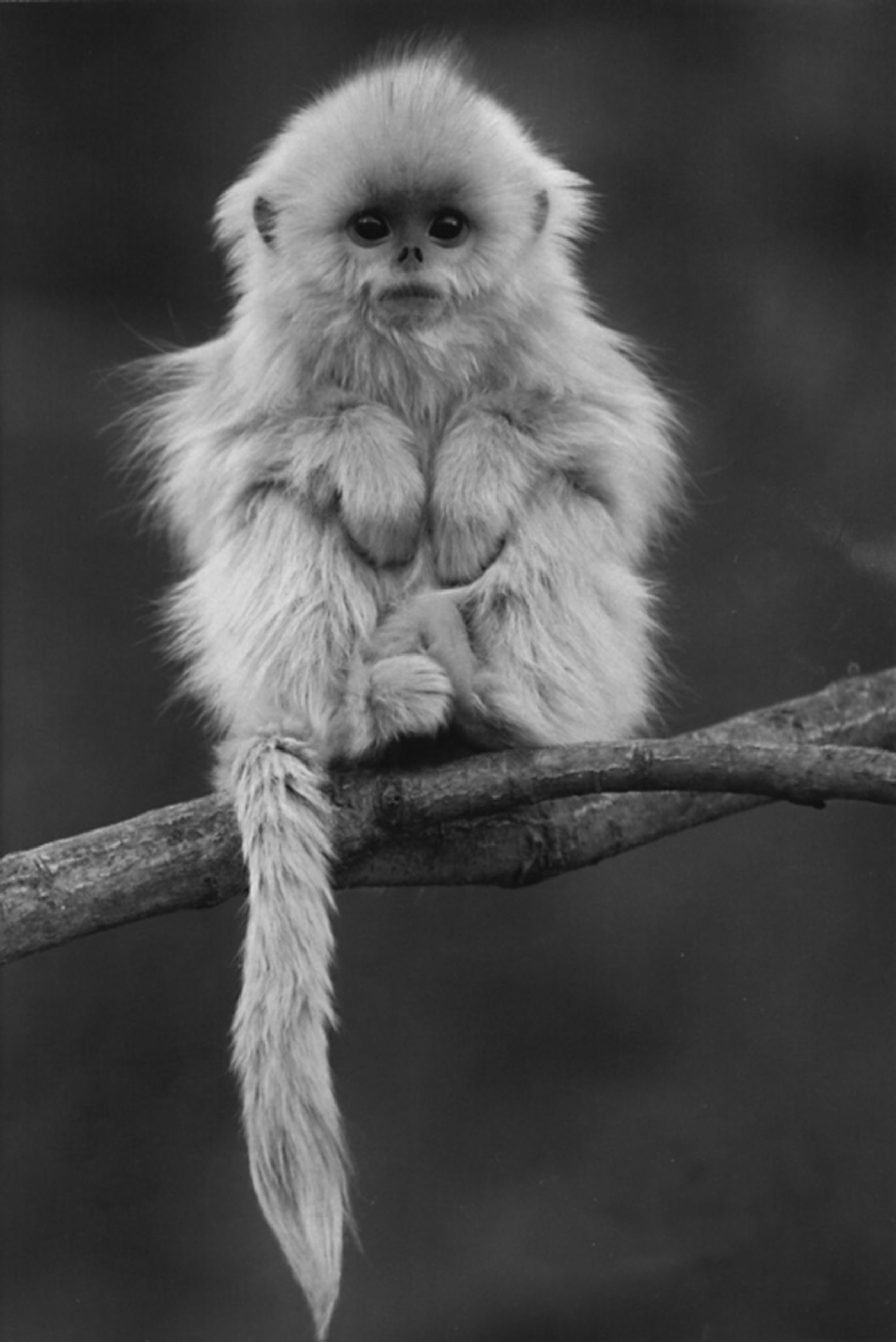 animal themes, one animal, wildlife, animals in the wild, mammal, focus on foreground, looking away, close-up, monkey, sitting, full length, animal hair, animal head, no people, front view, zoology, portrait, nature, outdoors, day