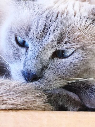 One Animal Animal Themes Mammal Close-up Domestic Cat Animal Hair Feline Pets Whisker Domestic Animals Portrait No People Animal Eye Outdoors Day Vet  Millythecat Pumpthiscats
