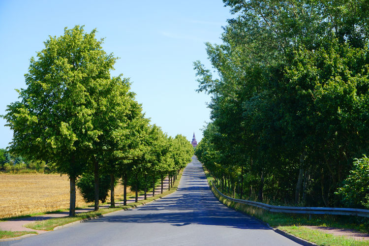 Road Tree Plant
