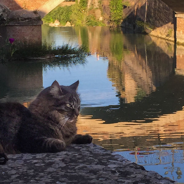 Domestic Mammal Animal Themes Animal Pets Domestic Animals Vertebrate Water Cat One Animal Feline Domestic Cat Reflection No People Sitting Lake Rock Relaxation Solid Whisker