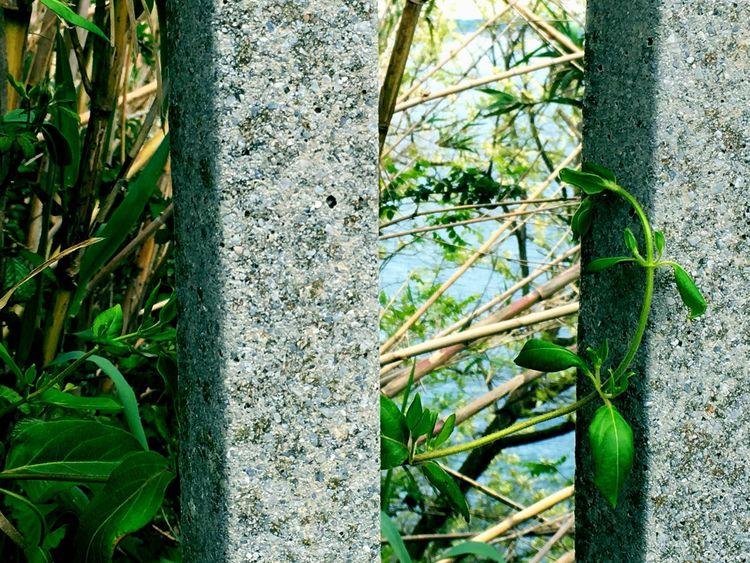 Al Fondo El Mar Barandilla Mar Arbusto Verde EyeEm Best Shots EyeEm Gallery EyeEm Best Edits Eyeemphotography Eyeemspain Hondarribi Pais Vasco Euskadi