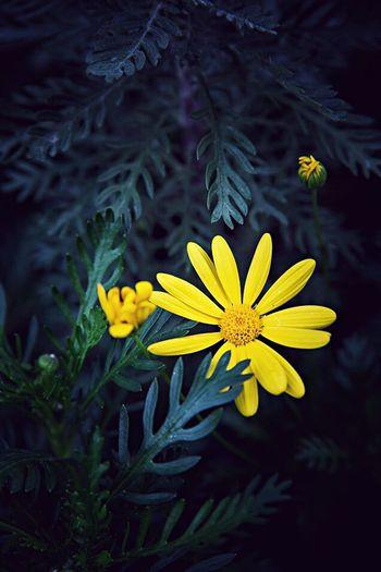 故事里的小黄花,从出生那年就飘着~童年的荡秋千,随记忆一直荡到现在~晴天… Flower Beauty In Nature Yellow Growth Petal