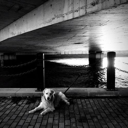Dog sitting on pier