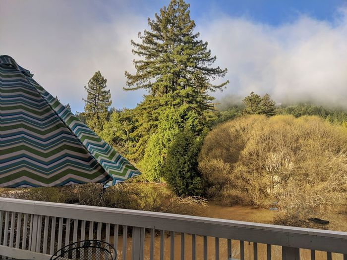 Fog. Flood waters. Golden. Deck. Railing White Wood Foggy Fog Golden Green Coniferous Tree Umbrella Stripes Blue Layered Effect Flood Water Elevated Nature Tree City Sky Architecture Cloud - Sky