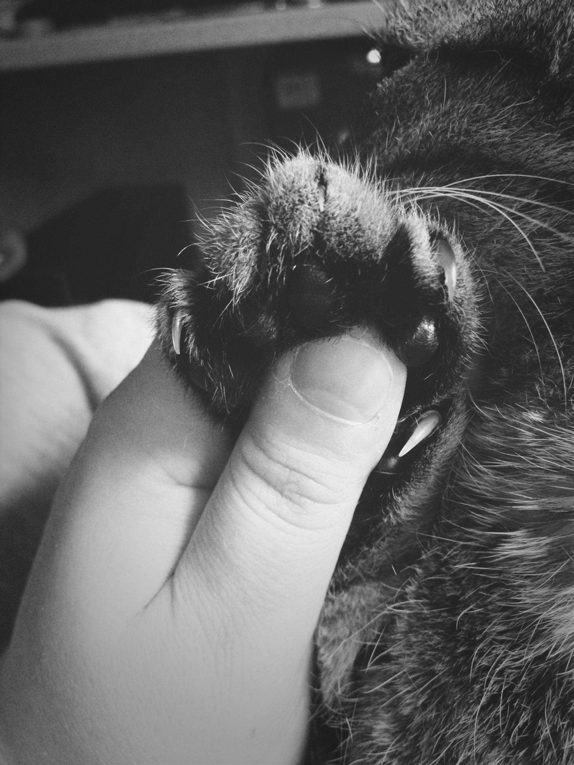 person, one animal, animal themes, part of, cropped, unrecognizable person, holding, human finger, close-up, pets, domestic cat, domestic animals, focus on foreground, lifestyles, mammal, wildlife
