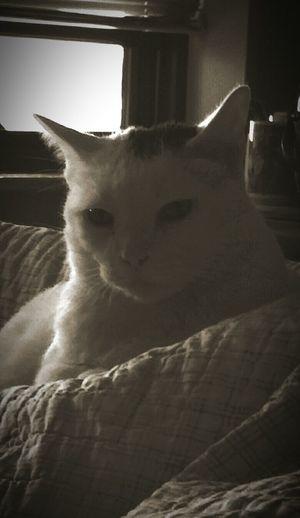 Beautiful Animals  My Kitties  I Love My Cat ❤