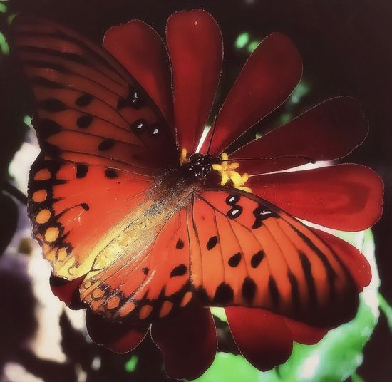 🦋 🌞 🌺 Butterfly - Insect Butterfly Animals In The Wild Animal Themes Close-up No People Animal Markings Beauty In Nature Intricacy Nature Freshness Spread Wings Ethereal Enchanting Textures And Surfaces Taking Photos Relaxing Peaceful Afternoon Serenity Flying Softness