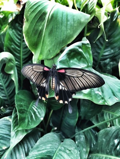 Butterfly... Animals In The Wild Animal Themes One Animal Leaf Green Color Insect Animal Wildlife Day Outdoors Nature Plant No People Growth Spread Wings Beauty In Nature Close-up Perching