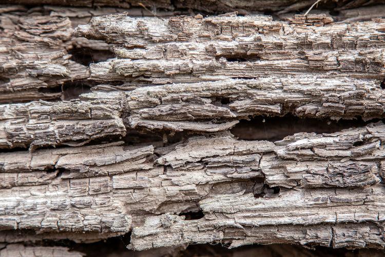 Texture of an