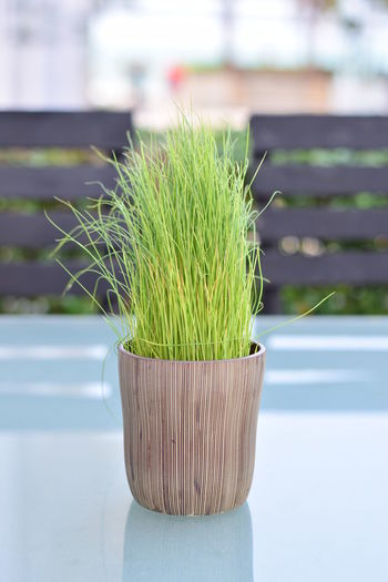 Plant Green Color Nature Growth Day Freshness Close-up Rice Plant Rice Vase Vase Vase Of Flowers
