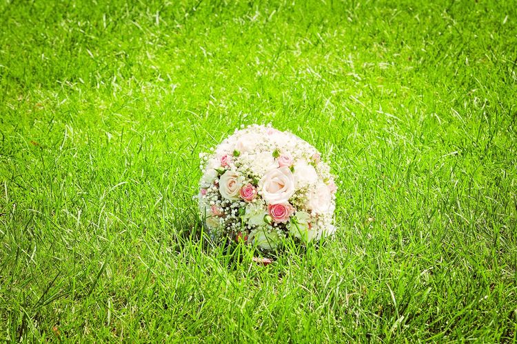 Grass Growth Freshness Green Color Flower Flower Head Fragility Plant Weding WeddingFlowers Buket Love