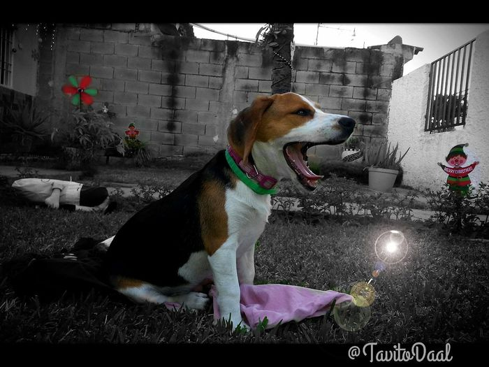 Relaxing Playing Garden Donna