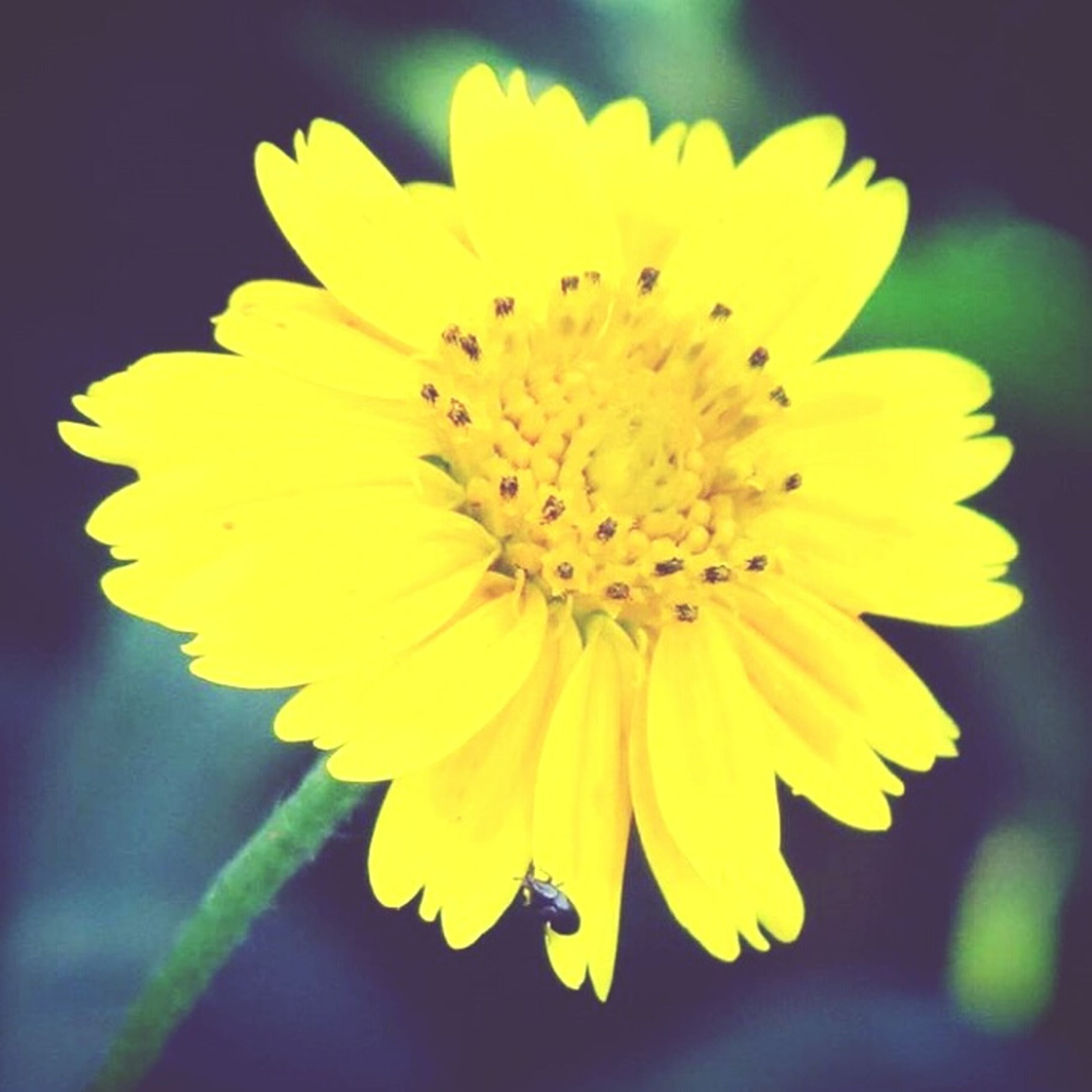 flower, petal, yellow, freshness, flower head, fragility, growth, close-up, beauty in nature, single flower, blooming, pollen, nature, focus on foreground, plant, in bloom, blossom, outdoors, no people, selective focus