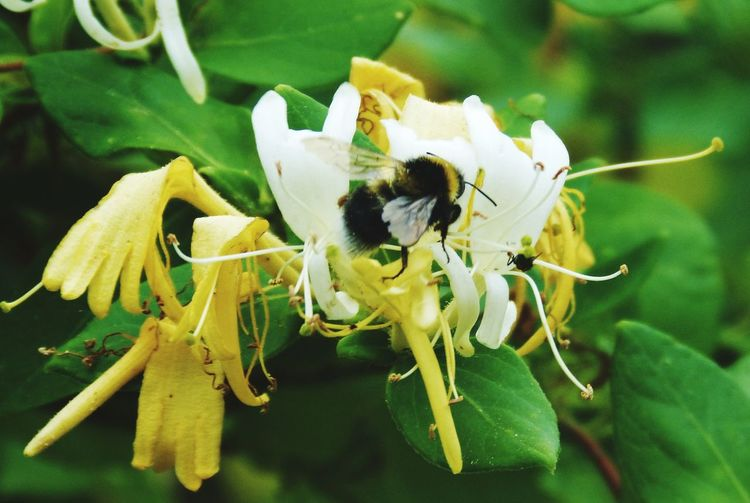 Frelon Insecte Nature Fleur Flower