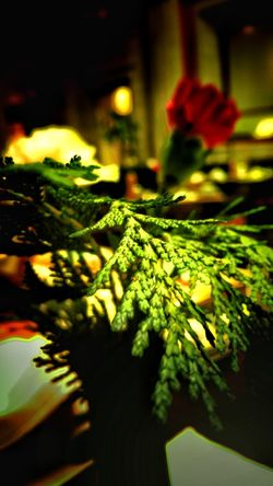 Breakefast Focus On Foreground No People Green Color Close-up Leaf Night Indoors  Nature
