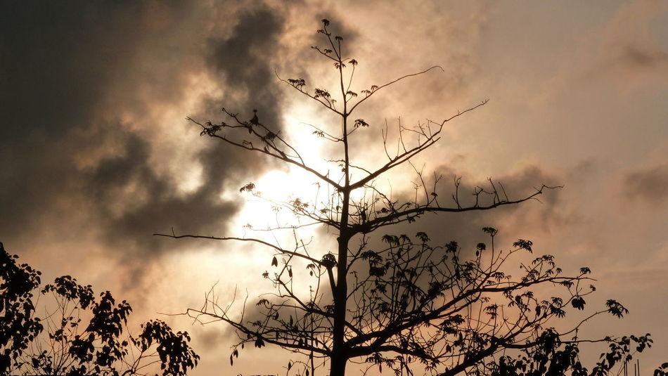 Tree sunset Cloud - Sky Outdoors No People Beauty In Nature NTB Lombok Island DELTA API Rumahalir EyeEm Selects