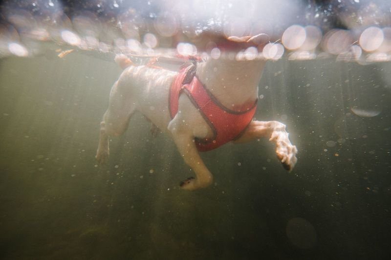 Close-up of dog swimming in water