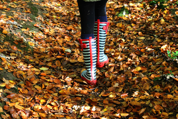 Low Section Of Person Walking On Leaves Covered Field During Autumn