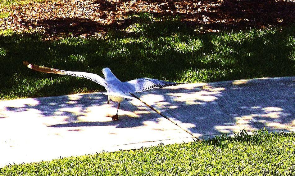 At The Park Birds In Flight Bird Watching Seagull