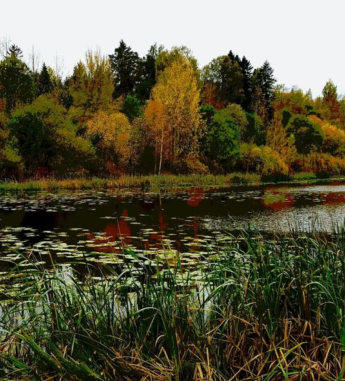 Autumn Hello World Water Reflections Rainy Taking Photos Colors Check This Out EyeEm Gallery Always Authentic Photografy
