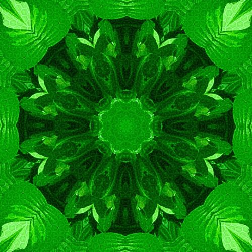 Hosta (kaleidoscope edit) Green Meditation Playing With Edits Plant Natures Diversities Nature On Your Doorstep Nature_collection From My Point Of View Patterns In Nature