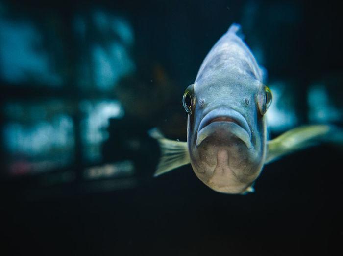 Fish swimming in museum