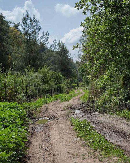 Mud Road North Israel Trip Trekking Summer Weekend Green Trees Etc TagForLikes Instalike Instadaily Instagood Ig_israel Igworldclub_country Igers IGDaily