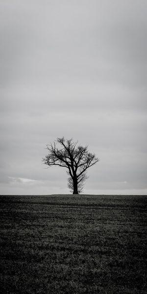 Lone tree at Altofts Bare Tree Nature Sky Landscape Isolated Non-urban Scene Single Tree