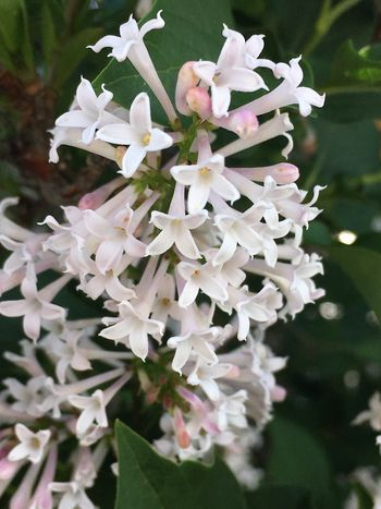 Beauty In Nature Flowers Springtime EyeEm Nature Lover Plant Flowering Plant Flower White Color Vulnerability  Fragility Growth Beauty In Nature Freshness Petal Flower Head Nature Day Outdoors Botany