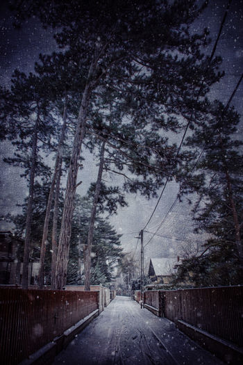 Street amidst trees against sky during winter