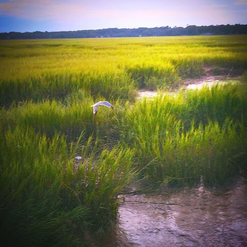 Protecting Where We Play Wetlands WetLandsTrust Skidaway Island United States EyeEm Best Shots EyeEm Nature Lover Nature_collection Nature