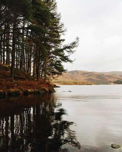Loch Trool with Scots Pines Landscape_Collection Scotland Shades Of Winter The Week on EyeEm Beauty In Nature Lake Landscape Nature No People Outdoors Scenics Sky Tranquil Scene Tranquility Travel Destinations Tree Water