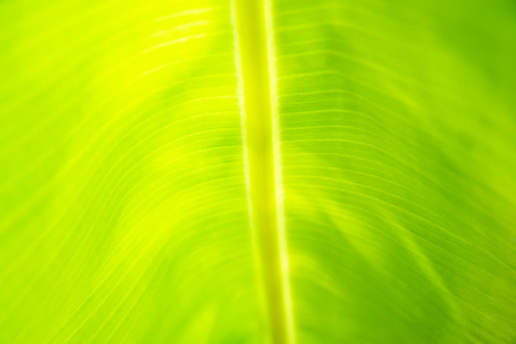 Beautiful Green Light Natural Nature Plant Textured  Abstract Art Backgrounds Cell Closeup Color Design Environment Focus Leaf Leaves Material Pattern Wallpaper
