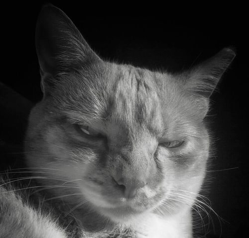 Catman! Monday Blues Blackandwhite Cats Catoftheday What I Value EyeEm Best Shots AntiM