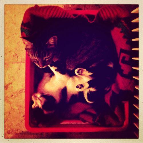 Cat Cats Gaïa &