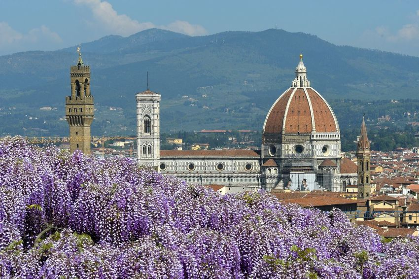 Beautiful view of Cathedral Santa Maria del Fiore in Florence from Bardini Garden with famous Wisteria in bloom. Italy Bardini Garden Cathedral Cityscape Duomo Di Firenze Firenze, Italy Florence Italy Garden Flowers Nature Toscana Travel Beauty In Nature Blossom Tree Blossoming  Brunelleschisdome Day Firenzeview Flower Fresh Nature Outdoors Purple Wisteria Tunnel Wisteria