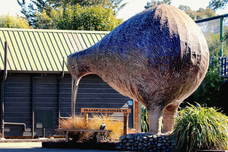 The iconic Kiwi that welcomes visitors at Orana Wildlife Park, Christchurch, New Zealand. Christchurch Icon Travel Zoo Attraction Bird Conservation Education Kiwi New Zealand Orana Wildlife Park