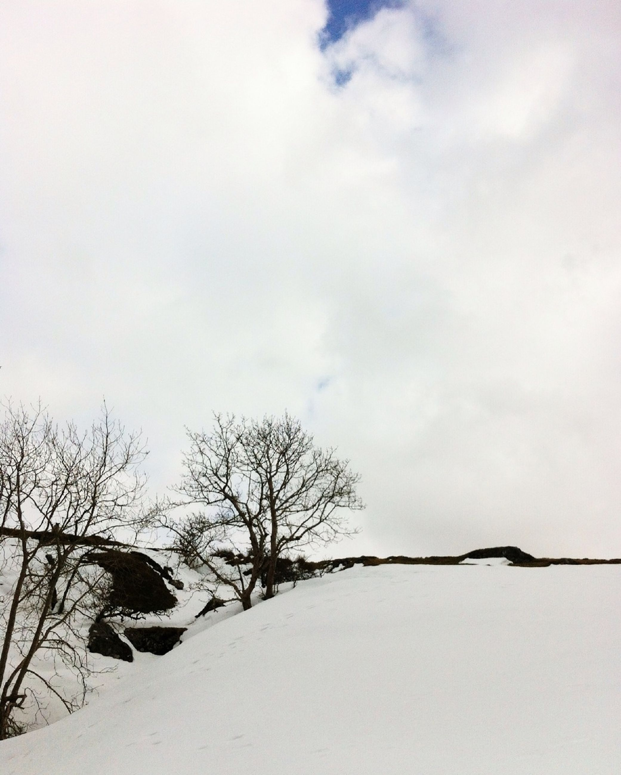 bare tree, snow, winter, tree, branch, sky, low angle view, cold temperature, nature, tranquility, weather, season, beauty in nature, tranquil scene, covering, built structure, outdoors, day, cloud - sky, no people