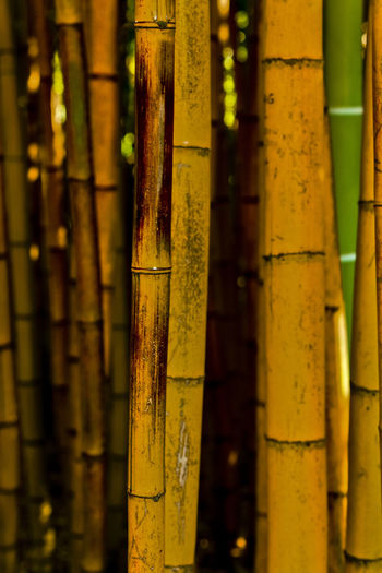 Detail shot of bamboo plant
